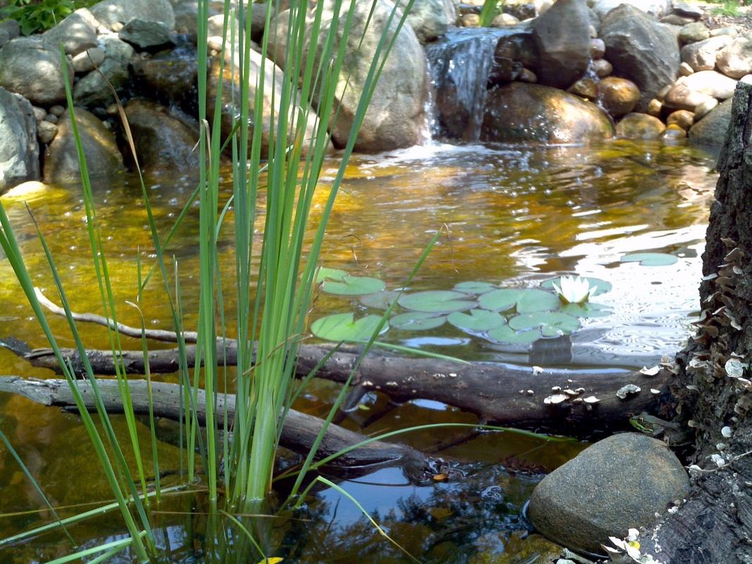 backyard pond projects va leesburg loudoun northen virginia